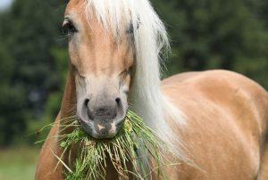 giovanigenitori-cavalli-e-bimbi