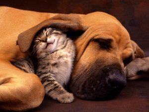 cane-e-gatto-coccole